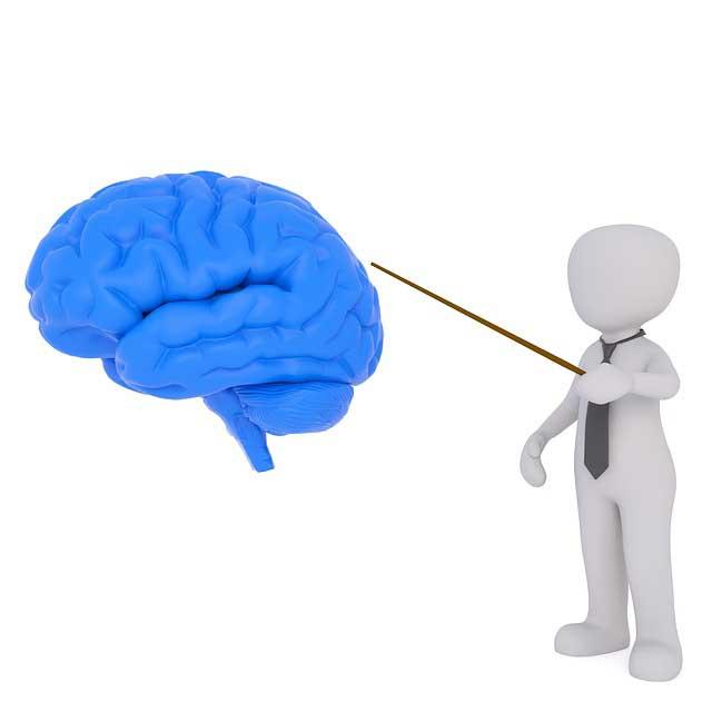 Gehirn gross