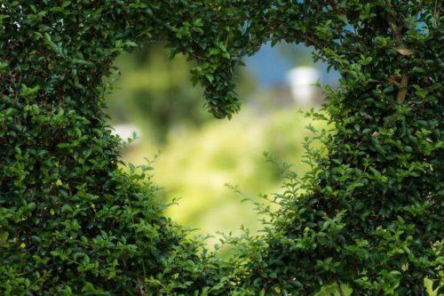 Herz Pflanze