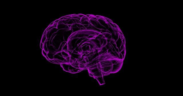 Gehirn - Innerer Schweinehund
