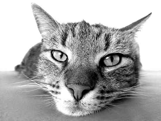 Katze wach