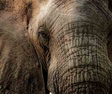 Elefant Falten