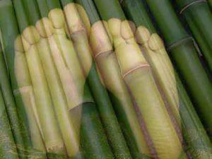 Bambus-Pflaster