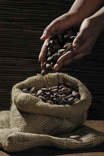 Kakaobohnen für dunkle Schokolade